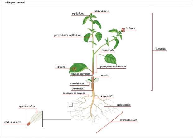 μερη φυτου