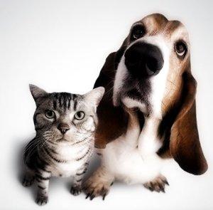 cat_dog_2